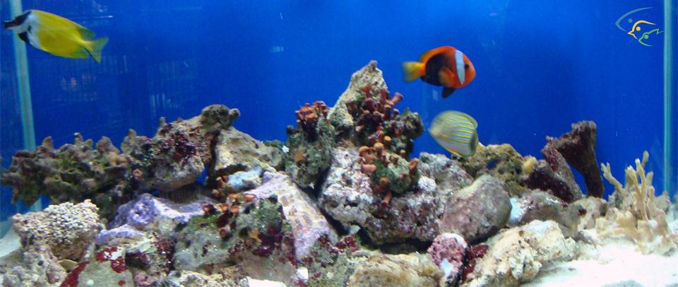 pin pesci marini e coralli animali in vendita a bari on