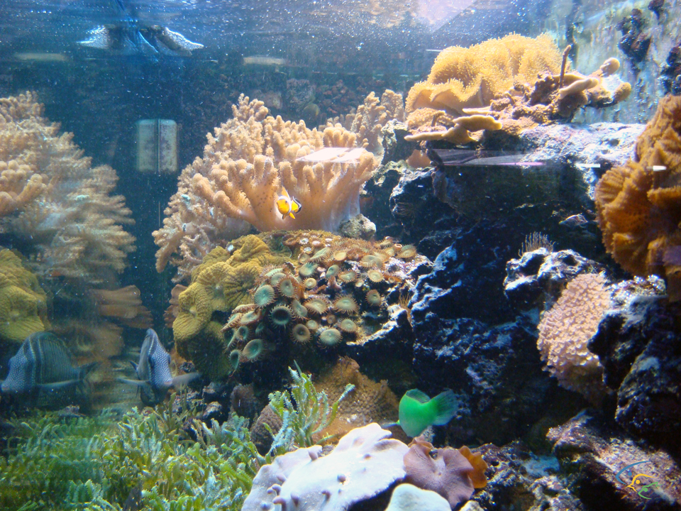 Foto acquari pesci tropicali uccelli esotici e animali rari for Acquari marini offerte