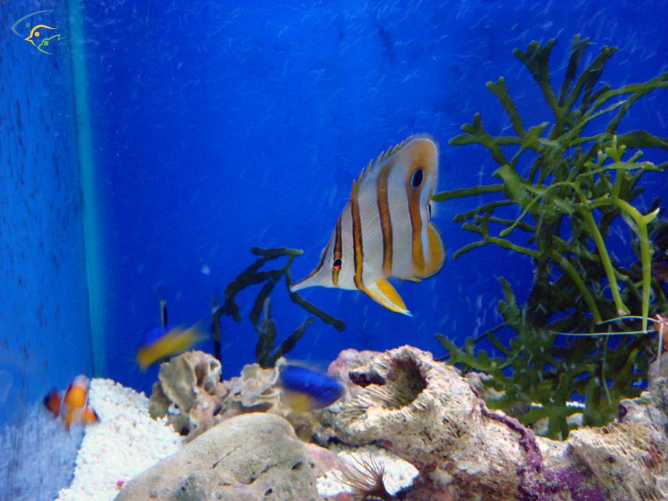 Foto acquari pesci tropicali uccelli esotici e animali for Pesci e acquario