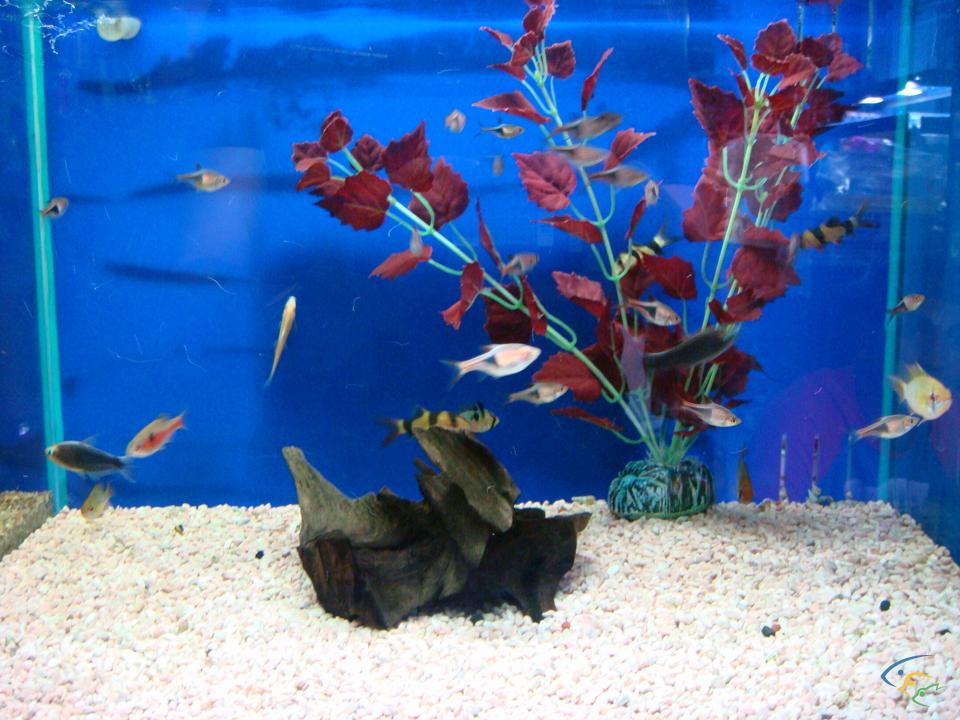 Foto acquari pesci tropicali uccelli esotici e animali rari for Pesci tropicali acquario