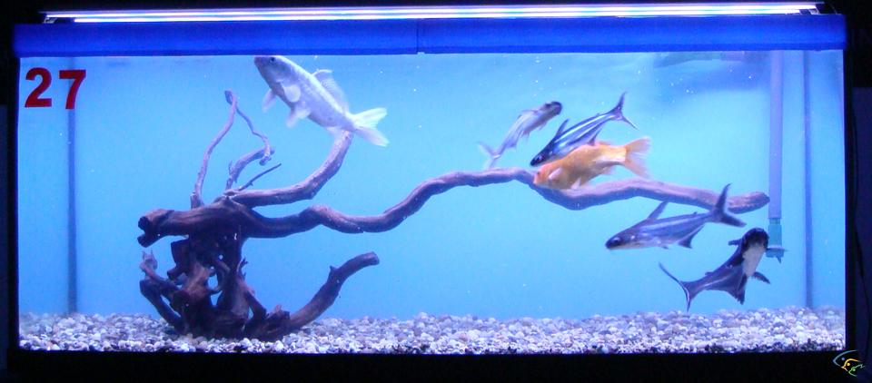 Foto acquari pesci tropicali uccelli esotici e animali rari for Pesci acqua dolce on line