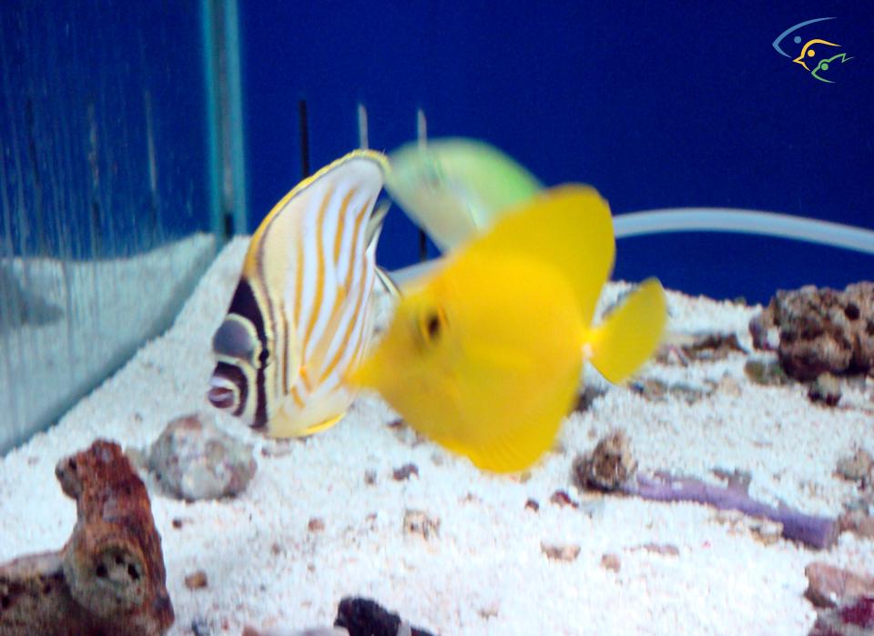 foto acquari pesci tropicali uccelli esotici e animali rari