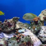 Acquari e Pesci Marini Tropicali a Taranto