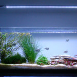 Acquari e Pesci Tropicali a Taranto